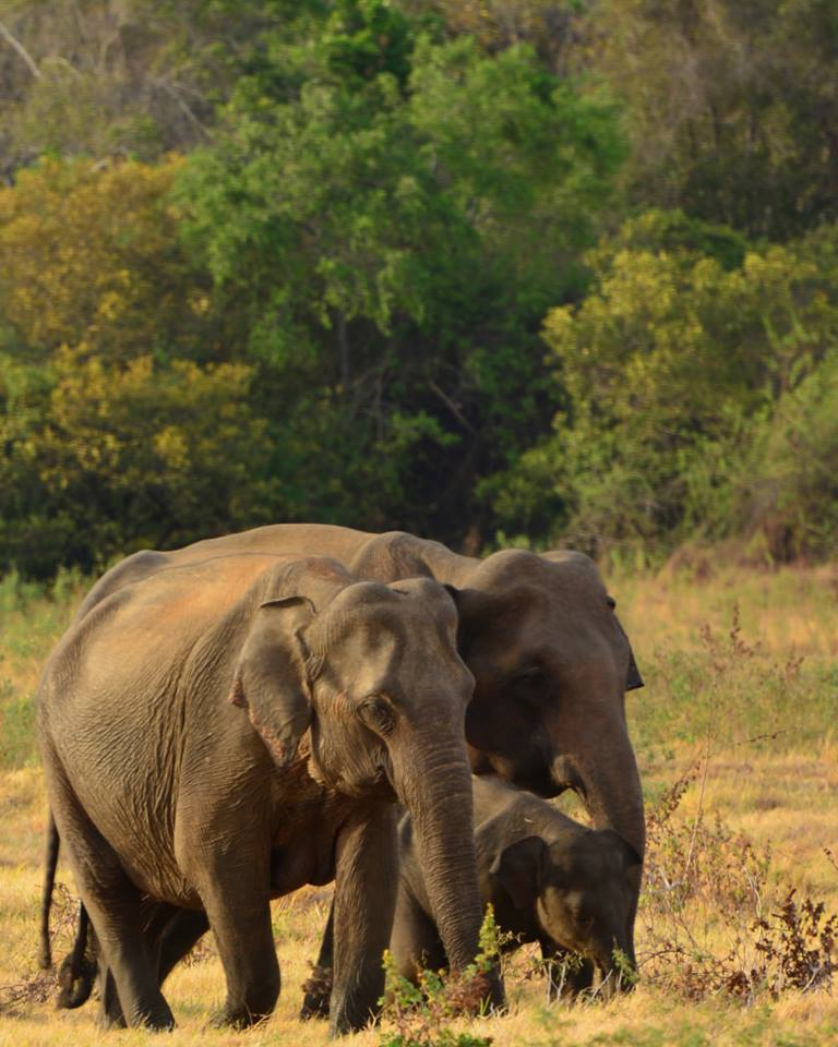 Find out more about Yala Safari
